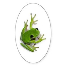Tree Frog - Oval Decal