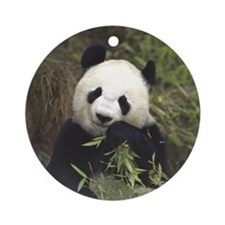 Panda Portrait Ornament (Round)