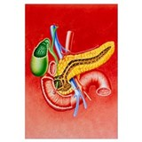 Illustration of duodenum, pancreas