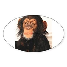 Monkey! Oval Decal