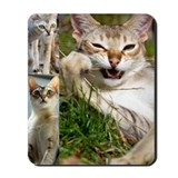 Singapura Cat Mousepad