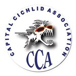 CCA_2007_logo_bold_w_initials,_shadow.png Round Ca