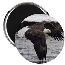 Eagle, Fish in Talons Magnet