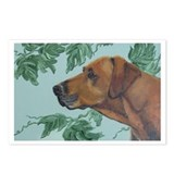 """Rhodesian Ridgeback"" Postcards (Package of 8)"