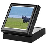 nakuru black rhino kenya collection Keepsake Box