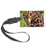 rothschild giraffe looking kenya collection Large