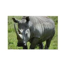 white rhino mother at nakuru kenya collection Rect
