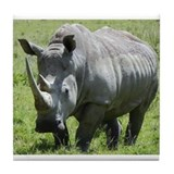 white rhino mother at nakuru kenya collection Tile