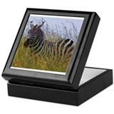 plains zebra in grass kenya collection Keepsake Bo