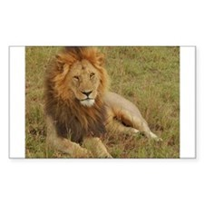 male lion kenya collection Decal