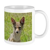 silverbacked jackal close kenya collection  Tasse