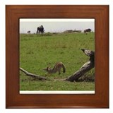 silverbacked jackal stretch kenya collection Frame