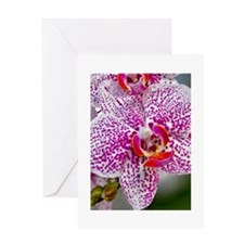 Orchid World Greeting Card