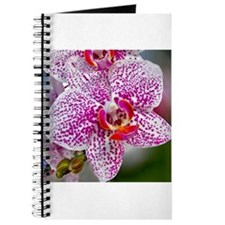 Orchid World Journal