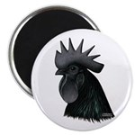 "Ayam Ceymani Rooster 2.25"" Magnet (100 pack)"