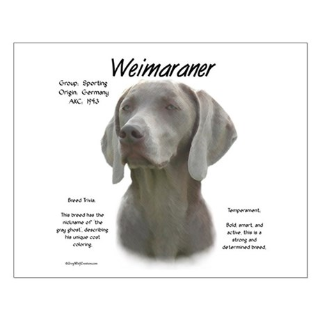 Weimaraner  Small Poster