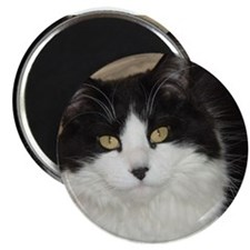 "Black and White Cat 2.25"" Magnet (10 pack)"