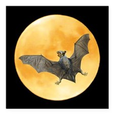 "Bat Squirrel Moon Square Car Magnet 3"" x 3"""