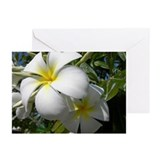 Tiare Flowers Greeting Cards (Pk of 10)