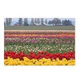 Funny Tulips Postcards (Package of 8)