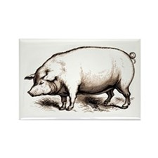 Victorian Pig Rectangle Magnet (10 pack)