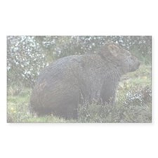 Tasmanian Wombat Rectangle Decal