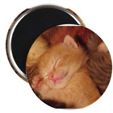 "Sleepy little Kitty 2.25"" Magnet (10 pack)"