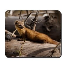 """Pine Marten"" Wildlife Mousepads"