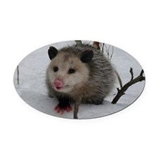 Snow Possum Oval Car Magnet