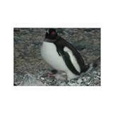 Gentoo-Baby Rectangle Magnet
