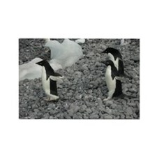 Adelie Penguins Rectangle Magnet (10 pack)