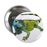"Oh How Iguana Go Home 2.25"" Button"
