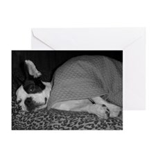 Funny French bulldog terrier Greeting Cards (Pk of 10)