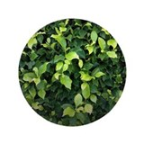 Green Ivy 3.5&quot; Button
