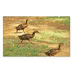 Saint Lucia.jpg 5.5 x 4.25 Flat Cards