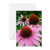 Echinacea Greeting Cards (Pk of 10)
