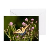 Tiger Swallowtail Greeting Cards (Pk of 10)