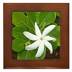 Tahitian Gardenia Flower Framed Tile