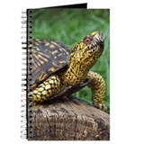 Box Turtle Journal