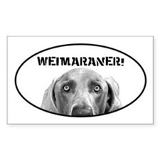 Weimaraner In A Box! Oval Decal