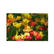 Tulips in Bloom Rectangle Magnet (100 pack)