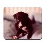 Greyhound Puppy Mousepad