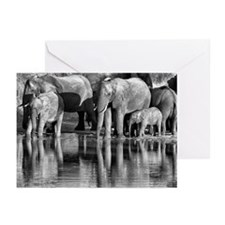 Elephant Reflections Greeting Cards (Pk of 10)