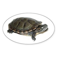 Painted Turtle Oval Decal