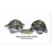 Baby Box Turtles - Postcards (8-Pack)