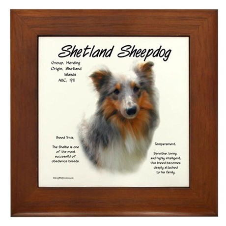 Shetland Sheepdog Framed Tile