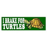 Turtle Bumper Car Sticker