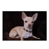 Cute Chihuahuas Postcards (Package of 8)