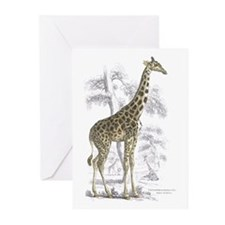 Giraffe Greeting Cards (Pk of 10)