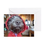 German wirehaired Pointer Greeting Cards(Pk of 10)